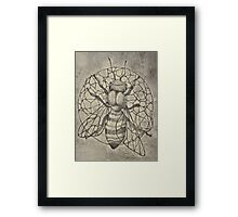Bee etching  Framed Print