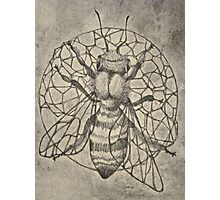 Bee etching  Photographic Print