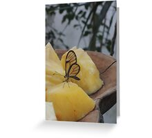 Transparency is a Wonderful Thing Greeting Card