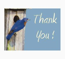 Eastern  Bluebird & His House - THANK YOU! Kids Clothes