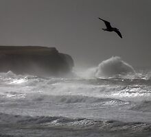 Wind Bay  by Paul  Green