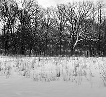 Winter Solace Woods Image 1 (B&W) by Petros Koutoupis