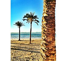 Palma perspective  Photographic Print