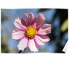 Wonderful colourful flower Poster