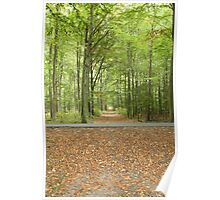 Danish forest colourful green  Poster