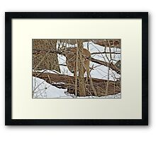 The Doe And The Snow - Odocoileus virginianus Framed Print