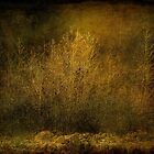 Golden Forest by CarolM
