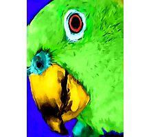 green bird Photographic Print