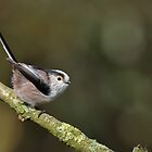 Long tailed tit - I (Aegithalos caudatus) by Peter Wiggerman
