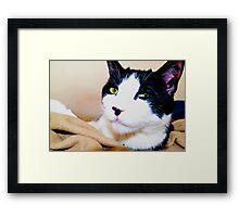 Carl the Cat  Framed Print