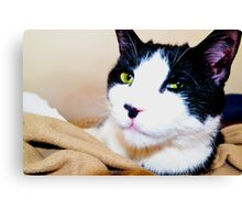 Carl the Cat  Canvas Print