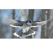 Spread Your Wings And Fly! Photographic Print