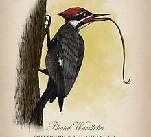 Pileated Woodlicker - Dryocopus Vermilingua by Howard Dale