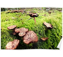 Mushrooms and Fern. Poster