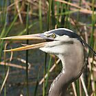 Great Heron by George  Link