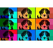 Bernese Mountain Dog Montage! Photographic Print