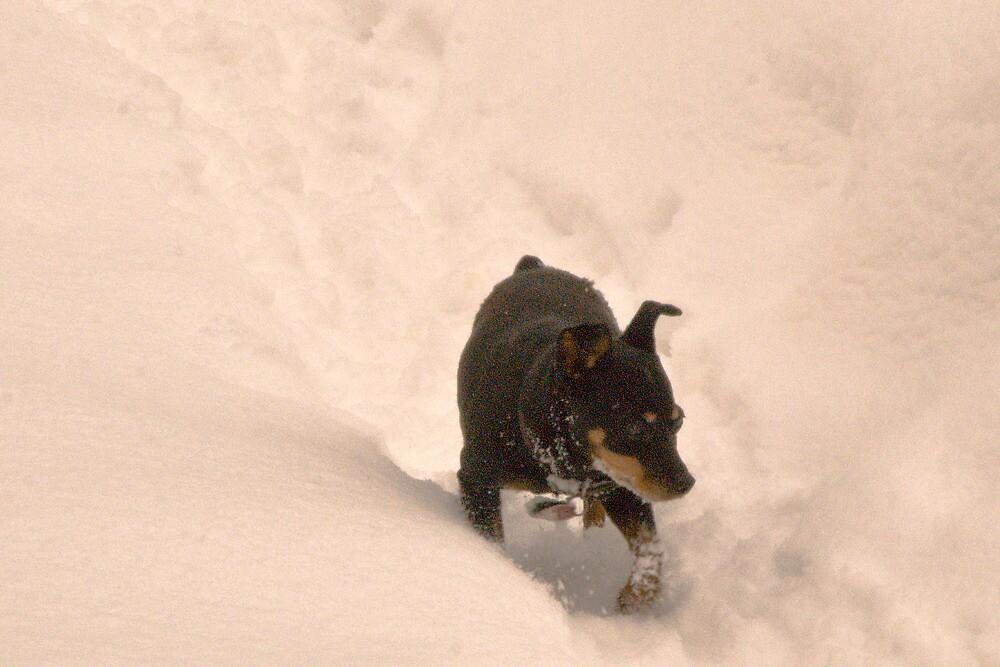 Minnie in the snow by Bryan D. Spellman
