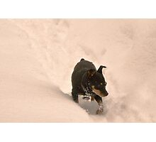 Minnie in the snow Photographic Print