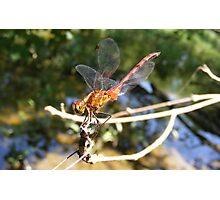 Resting Dragon Photographic Print