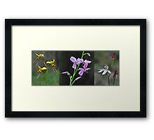 Wildflowers returning after a forest fire Framed Print