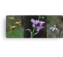 Wildflowers returning after a forest fire Canvas Print