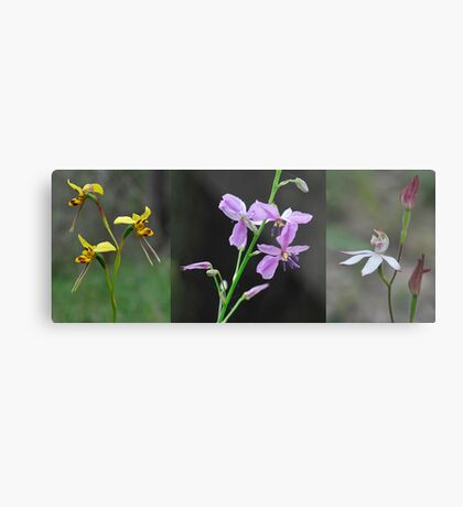 Wildflowers returning after a forest fire Metal Print