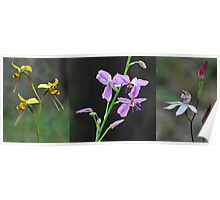 Wildflowers returning after a forest fire Poster