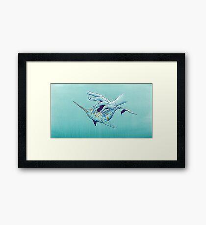 VIII - Narwhal Framed Print