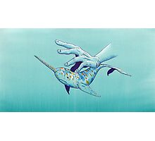 VIII - Narwhal Photographic Print