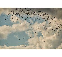 The Birds II Photographic Print