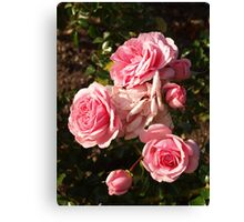 Rosa Home and Garden Canvas Print