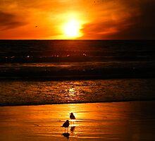 Gulls at Dusk by JD Delgado