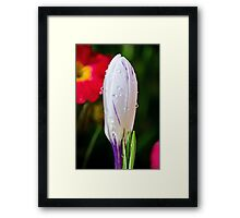 White With a Hint Of Purple Framed Print
