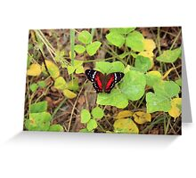 Red and Black Butterfly on a Leaf Greeting Card