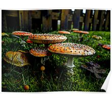 Happy Together ~ Amanita muscaria ~ Poster