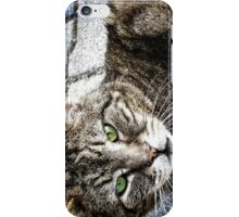 a cat iPhone Case/Skin