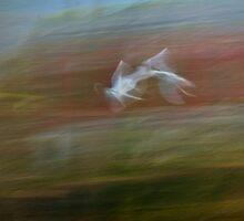 gulls upon a river by kindamo