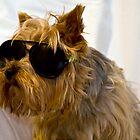 My dog by Wizi-Top