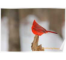 Cardinal On A Stick Poster