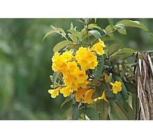 Yellow Flowers on a Bush Photographic Print