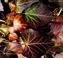 red leaves landscape format by NafetsNuarb