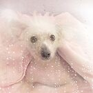 Chinese Crested Hairless Dog by Maria Dryfhout