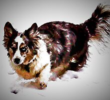 Maggie - Cardigan Welsh Corgi by Cathy Donohoue