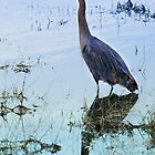 Blue Heron by Heather Haderly