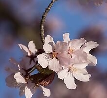Pink Spring - Sunlit Blossoms and Blue Sky, Vertical by Georgia Mizuleva