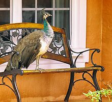 Fine Feathered Neighbor by Owed to Nature