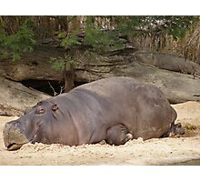 'SORRY JUST HAVE TO SLEEP IT OFF!' Rino at Werribee Zoo, Vic. Photographic Print