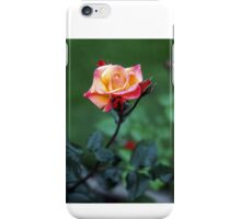 Rose Perfection iPhone Case/Skin