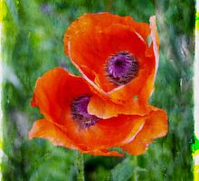 POPPIES by GaryCole