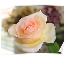 Apricot Nectar Rose Poster